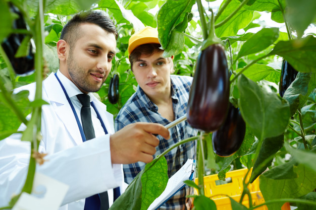 Tecnólogo Agroindustrial
